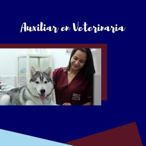 Auxiliar en Veterinaria INDECAP